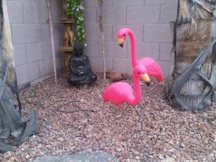flamingos_and_buddah